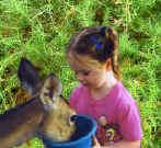 Feed the deer at Canyon Lake